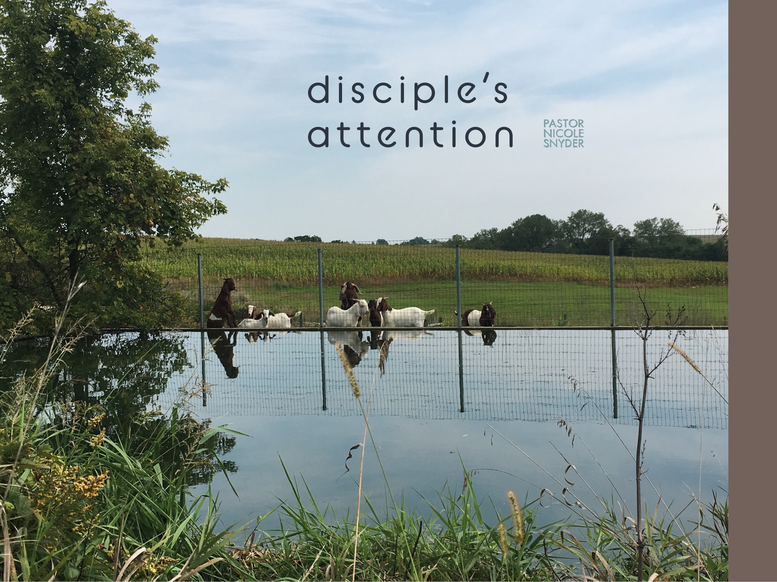Disciple's Attention